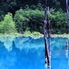就実の丘、美瑛川サイクリングロード、青い池、白ひげの滝、拓真館