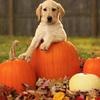 【切り方募集】私はかぼちゃを包丁で切ることができない