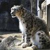 【子連れでお出かけ】多摩動物公園に行ってきた(多摩モノレールもおすすめ!)