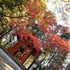 2020比叡山延暦寺の紅葉 ①横川エリア