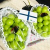 【ふるさと納税】便利で美味しいフルーツ定期便 12ヶ月の内容