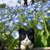 【昭和の日】ネモフィラとチューリップが満開の昭和記念公園へ