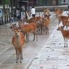 2018年6月 奈良「奈良公園で出会った生き物たち 【旧ブログより】