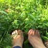その土で野菜は育つ?〜目にうつる全ての雑草はメッセージ♪〜