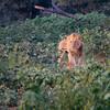 私が旅したリアル・ライオンキングの世界!!