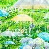 横浜イングリッシュガーデンの梅雨:Sony α7c + SEL35F14GM, SEL135F18GM