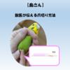 【鳥さん】獣医が伝える鳥の爪切り方法