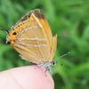 虫の季節も本番 初夏の訪れを知らせる虫たち