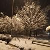義母がくも膜下出血で倒れ、大寒波で大雪の山形県へ行ってきました