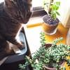 【猫とコチドレンの花】