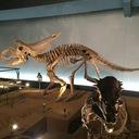 トリケラトプスにさわりたい
