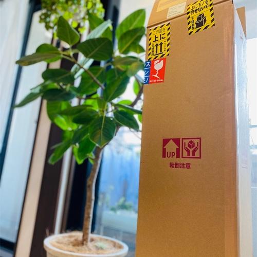 ふるさと納税で観葉植物「エバーフレッシュ」を入手
