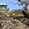 大阪城の梅林。
