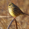 散歩道の小鳥たち