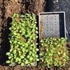 今日は、午前中アグリライフ、そして午後は草刈り
