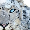 Apple Events Server Update OS X Snow Leopard/Lion