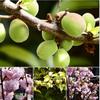 今年の梅の実は何故か小さいし少ないので見送り・・まぁ 昨年が、多過ぎた あと1年分は充分 ^^!