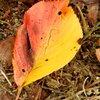 もうすぐハロウィーン  秋の風景