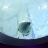 大阪の海遊館で出会った海の動物たち10!世界最大級の水族館にいってきた
