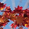 落ち葉の季節とカイリばあちゃん