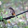 大阪城公園の野鳥 2020.11.9