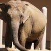 地球絶景紀行 ― アジアゾウを訪ねて ―