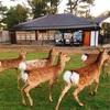 奈良の鹿さんとのコミュニケーションも結局人と同じってこと。