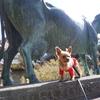 千頭の馬の中に一頭の牛を見つけられたら来世は幸せに・・・【観音寺】