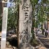 庭園好きなら行ってみて!!文京区 肥後細川庭園の素晴らしさをご紹介!!
