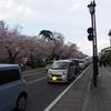 弘前城の桜は絶景!満開か花筏どちらかを狙っていくべし!