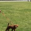 犬をのびのび遊ばせるには意外とヒットかも? 武蔵野の森公園に行く