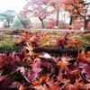 殿ヶ谷戸庭園に紅葉を見に行ってきました
