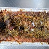 ポーランドの伝統料理:パシュテーテを食べるよ【ラパンとマグレカナールの2種】