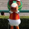 船橋競馬 穴馬予想【南関競馬全レース予想】3月14日(火)
