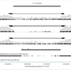 構造多型部位のマッピング状況を出力する samplot