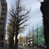 明るい山の道(甲州街道を歩く4)