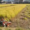 バインダー稲刈り&天日干しをしました。まだまだ頑張らねば!