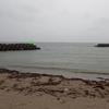 梅雨のあめ 灘浦サーフに 大マゴチ