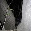 仔猫を見つけたけれど…