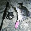 【チニング】天才の釣り。【マスゲン】