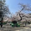 お花見@上野公園・2021年3月24日