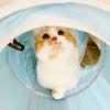 トンネルでるるちゃんと思いっきり遊びたい!