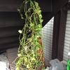 臨時休診と待合室の観葉植物について