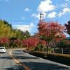 霧島の紅葉が意外ときれいだった話。きりん商店とPANYAくらぶ