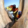 【Day70】最高の公園にて鳥の撮影をしまくった話withたくさんのいい写真