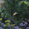 庭の生物たち第2弾 鳥編