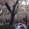 鶴舞公園で2018お花見!桜の見頃と混雑状況、何時から場所取りしようか