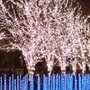 京都最大級のイルミネーション カップルが急増! アカペラコンサート