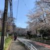 平成最後の桜の花