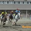 馬車・エサやり・レースが間近で!_旭川乗馬倶楽部のホースショー